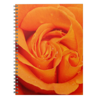 Flor color de rosa anaranjado cuaderno
