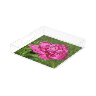 Flor color de rosa bandeja cuadrada