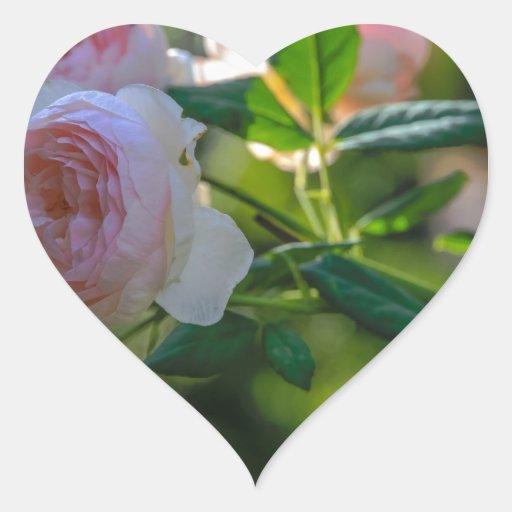 Flor color de rosa pegatina en forma de corazón