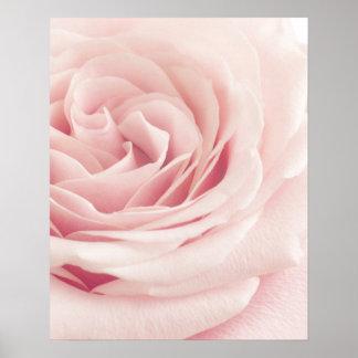 Flor color de rosa rosa clara - flores de los poster
