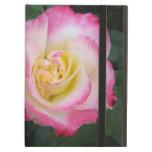 Flor color de rosa rosada
