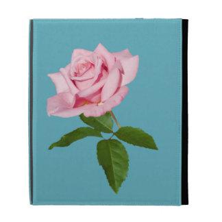 Flor color de rosa rosada con los descensos de roc