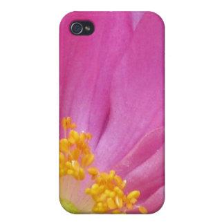 Flor color de rosa rosada iPhone 4 coberturas