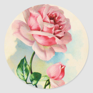 Flor color de rosa rosada hermosa pegatina redonda