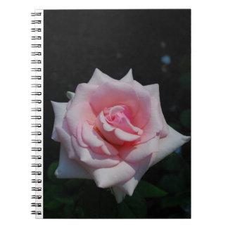 Flor color de rosa rosada magnífica en la libro de apuntes con espiral