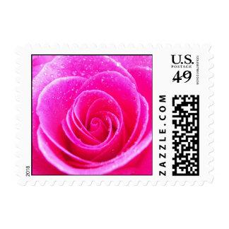 Flor color de rosa rosada oscura sello postal