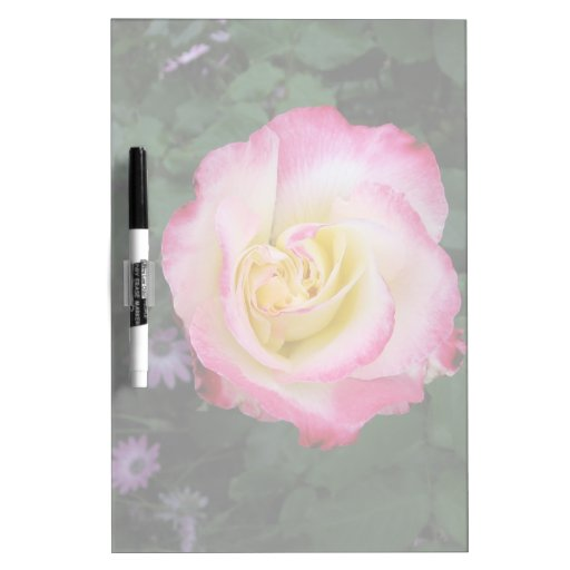 Flor color de rosa rosada pizarra blanca