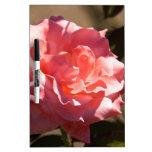 Flor color de rosa rosado tableros blancos