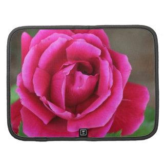 Flor color de rosa rosado vibrante Makro de Fuschi Organizador