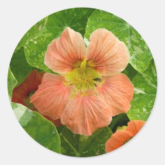Flor coloreada melocotón de la capuchina - hoja pegatina redonda