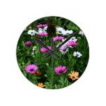 flor coloreada multi del campo de las margaritas d