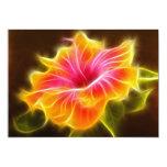 Flor colorida brillante del hibisco comunicado