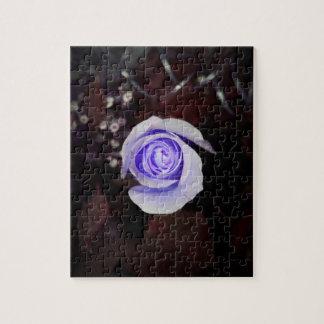 flor colorized rosa púrpura contra backgrou oscuro puzzle