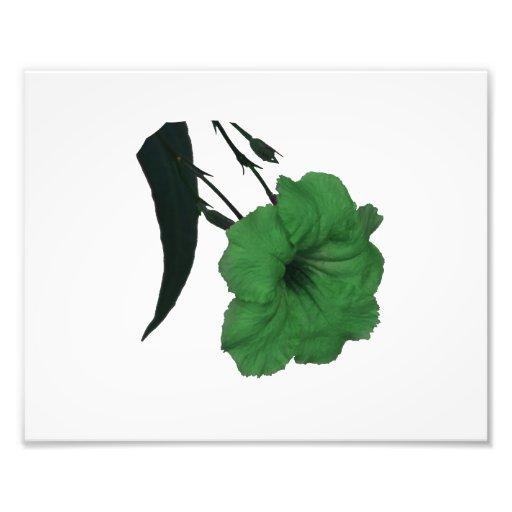 Flor colorized verde mexicano de la petunia impresión fotográfica