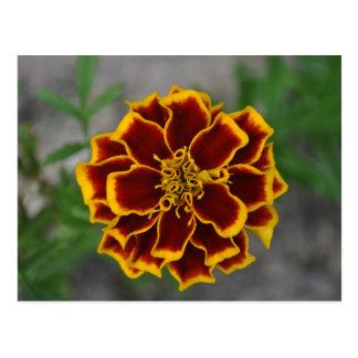 Flor con extremidades amarillas del pétalo tarjetas postales