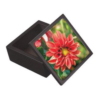Flor coralina de la dalia cajas de regalo de calidad