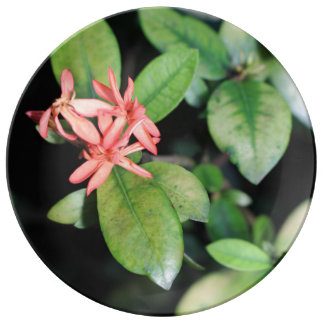 Flor coralina exótica tropical, placa de la plato de cerámica