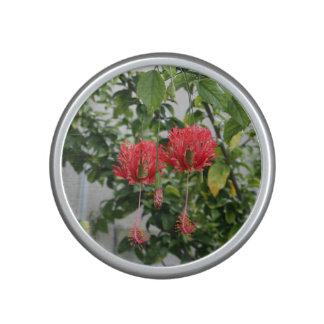 Flor coralina franjada tropical del hibisco altavoz con bluetooth