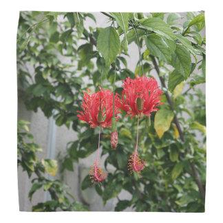 Flor coralina franjada tropical del hibisco bandana