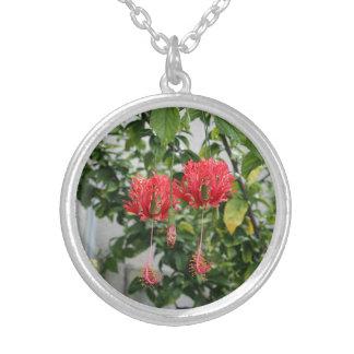 Flor coralina franjada tropical del hibisco colgante redondo