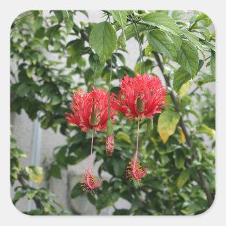 Flor coralina franjada tropical del hibisco pegatina cuadrada