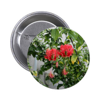 Flor coralina franjada tropical del hibisco pin redondo de 2 pulgadas