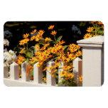 Flor - Coreopsis - el calor del verano Iman De Vinilo