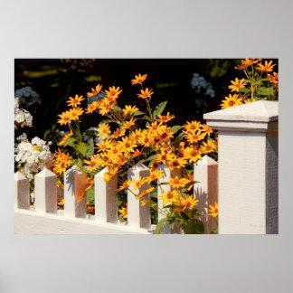 Flor - Coreopsis - el calor del verano Póster