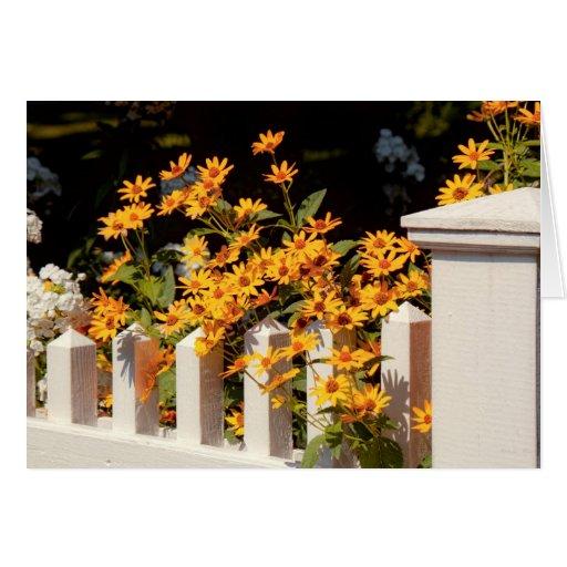 Flor - Coreopsis - el calor del verano Tarjeta De Felicitación