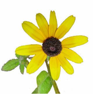Flor cortada fotoescultura vertical