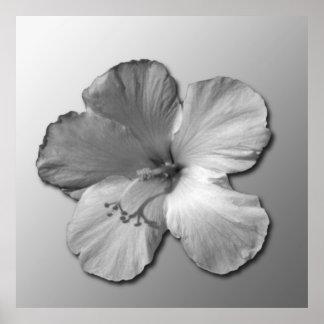 Flor Crean-Rosado Impresiones