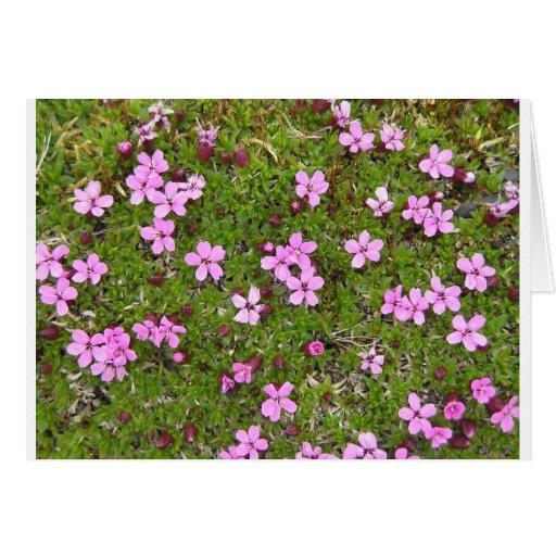 Flor de Alaska púrpura minúscula Tarjeta De Felicitación