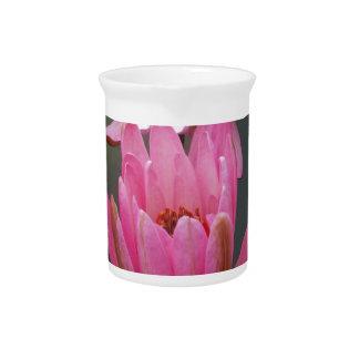 Flor de Asia Lotus