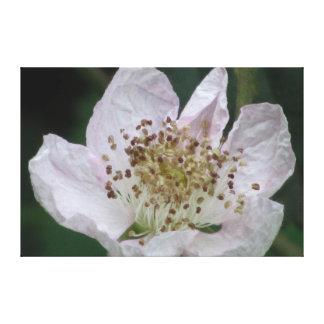 Flor de Blackberry Impresión En Lienzo