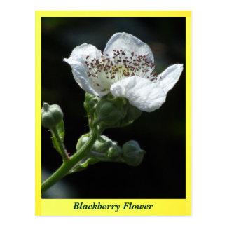 Flor de Blackberry Postales