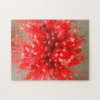 Flor de Boerbean enano, arenas de Sabi Rompecabezas