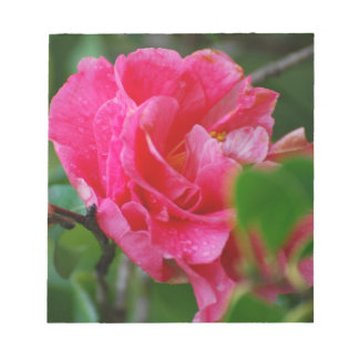 Flor de Camelia de las rosas fuertes Bloc De Notas