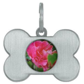 Flor de Camelia de las rosas fuertes Placas Mascota