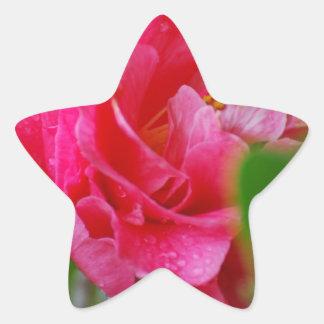 Flor de Camelia de las rosas fuertes Pegatinas Forma De Estrellaes Personalizadas