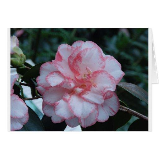 Flor de Camelia Tarjetón