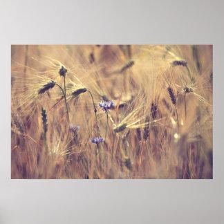 Flor de cereal poster