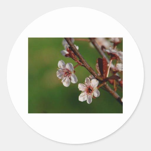 Flor de cerezo 1 etiqueta redonda