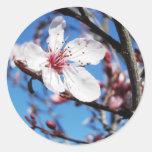 Flor de cerezo 2 etiquetas redondas