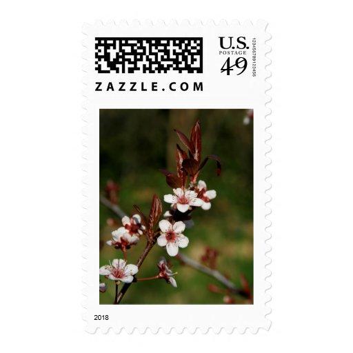 Flor de cerezo 2 sello