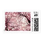 flor de cerezo 2 sellos