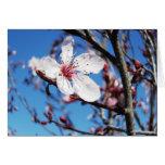 Flor de cerezo 2 tarjetas