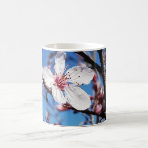 Flor de cerezo 2 tazas de café