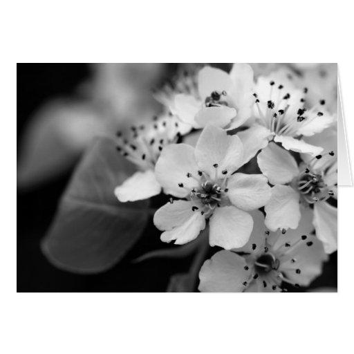 Flor de cerezo blanco y negro tarjetón