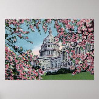 Flor de cerezo de Capitol Hill del congreso del Wa Póster