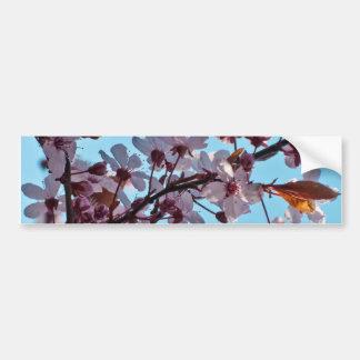 Flor de cerezo de la primavera etiqueta de parachoque
